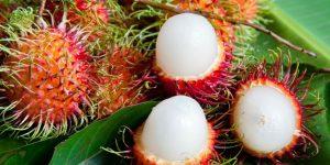 benefícios da rambutan