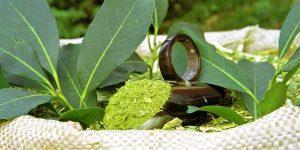 benefícios da erva-mate