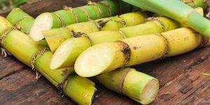 benefícios da cana-de-açúcar
