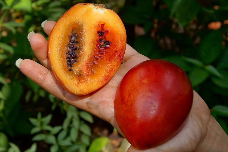 tamarillo fruta
