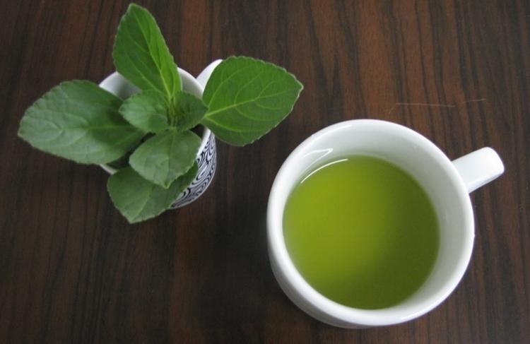 o chá de boldo melhora a absorção dos alimentos
