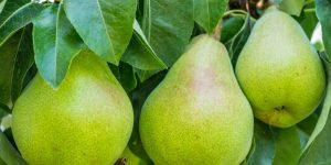 benefícios da pera