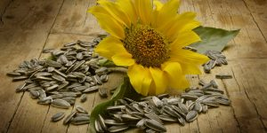 beneficios-sementes-de-girassol