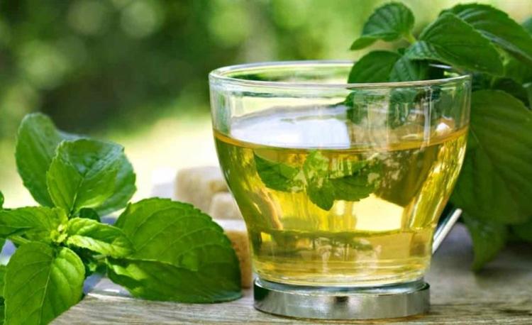 chá de boldo funciona como tratamento de convulsões