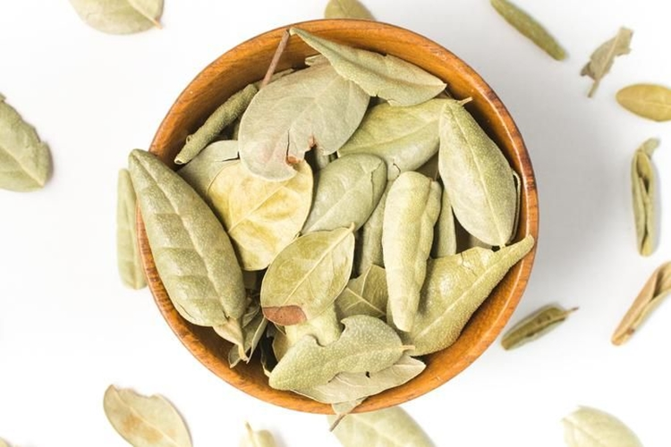 chá de boldo possui substancias antialérgicas