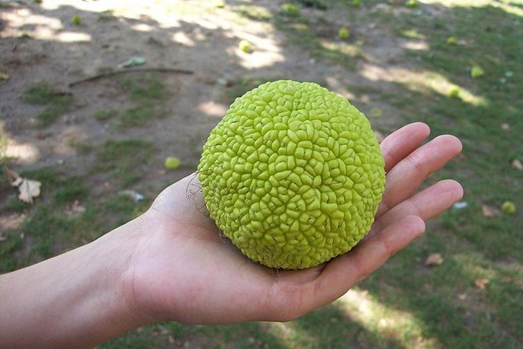 fruta pao