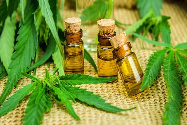 Os 18 Benefícios do Óleo de Cannabis Para Saúde