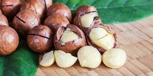nozes de macadamia