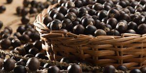 quais os benefícios do caroço de açaí?