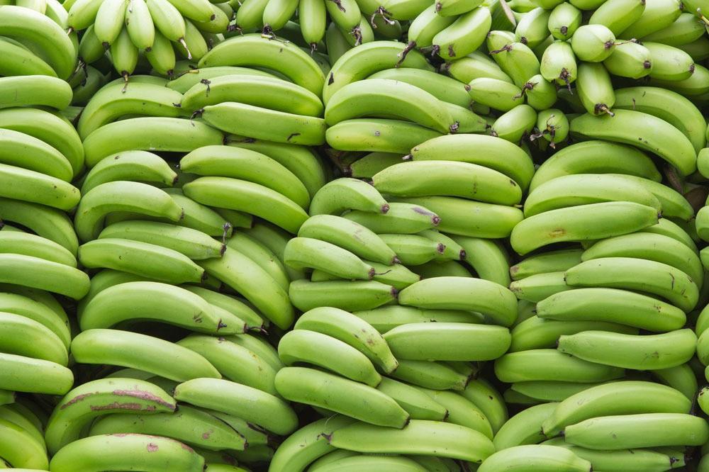 quais os benefícios da banana verde?