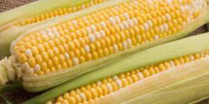 beneficios do milho verde doce
