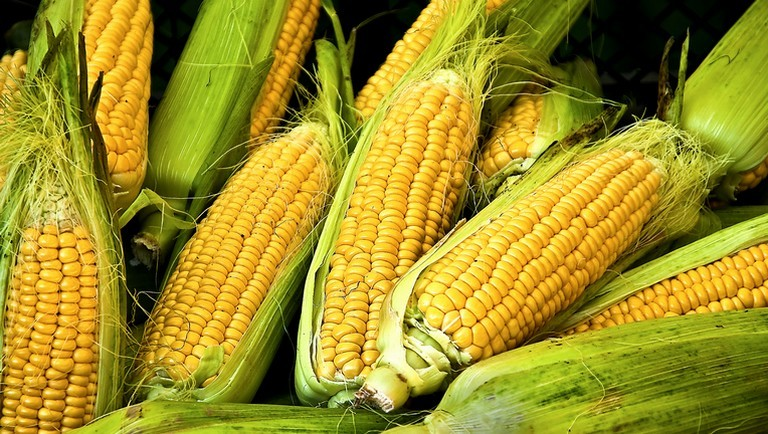 principais efeitos colaterais do milho