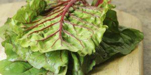 quais os benefícios das folhas de rabanete?
