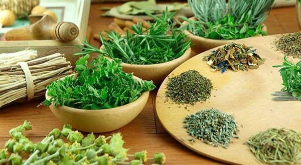 principais ervas para perder peso