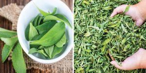 beneficios da stevia