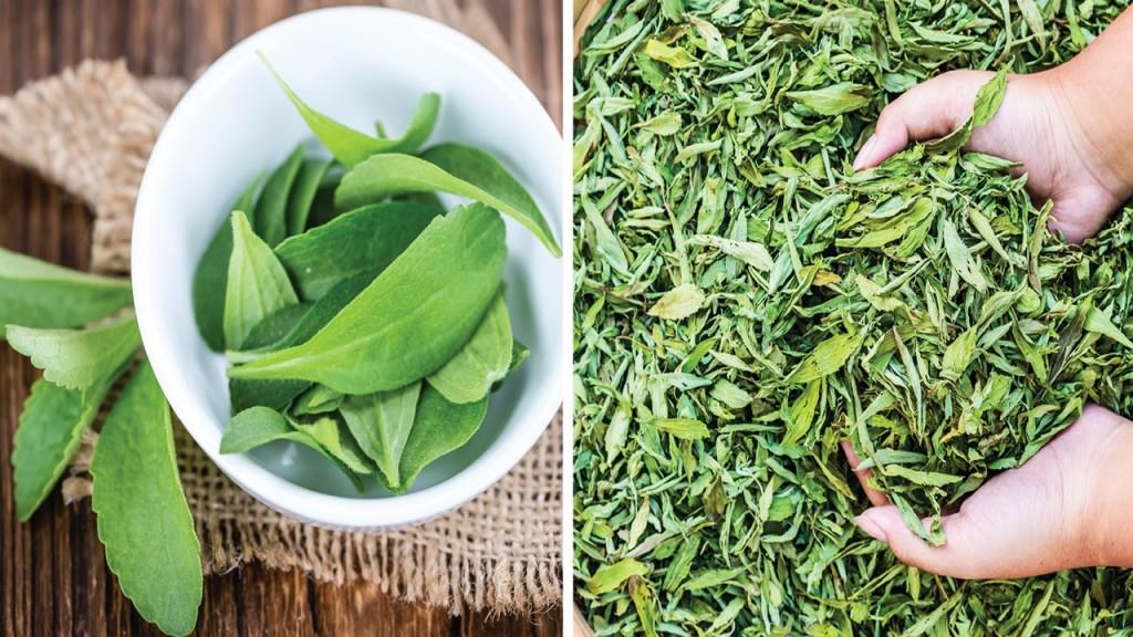Os 10 Benefícios da Stevia Para Saúde
