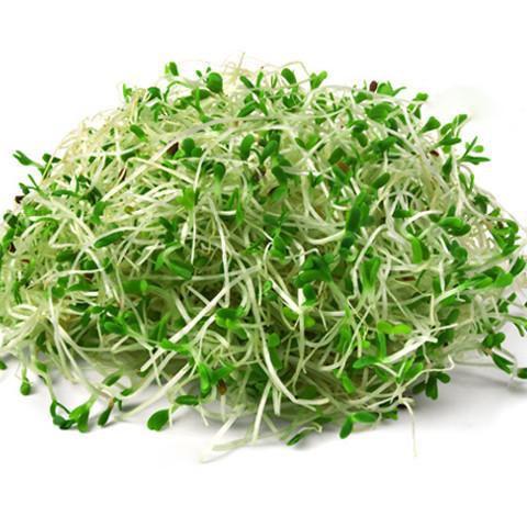 alfalfa pode ser uma cura para a artrite