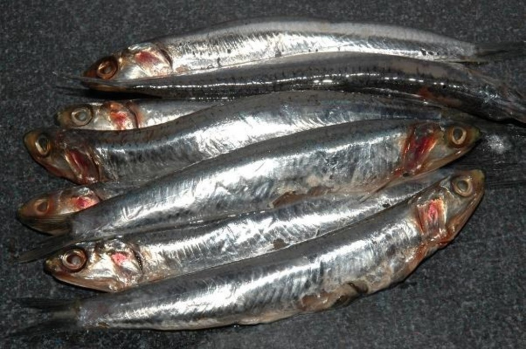 anchova beneficios