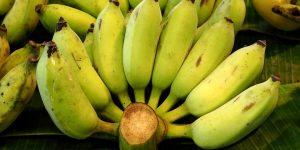 beneficios da banana balbisiana