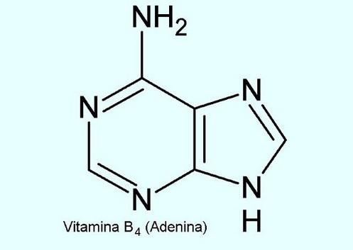 beneficios da vitamina b4