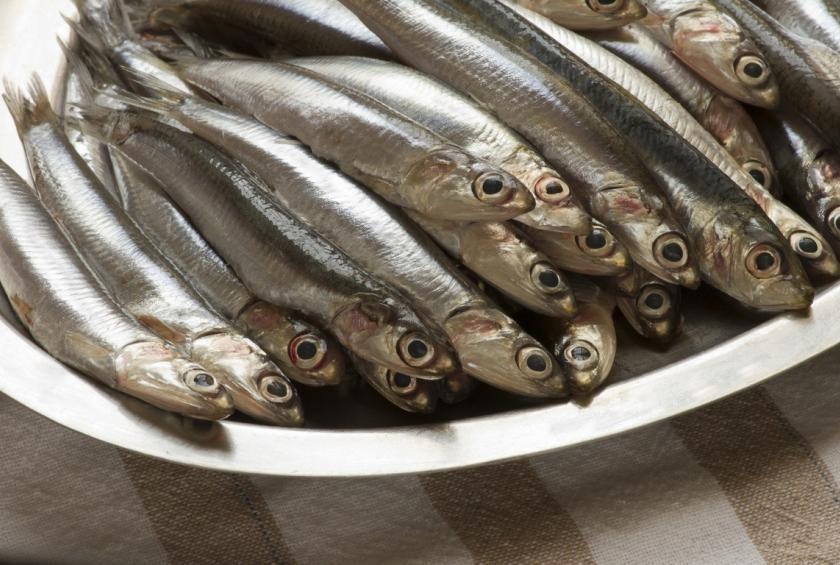 o que e anchova