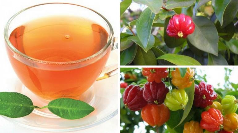 como preparar o chá de pitanga?