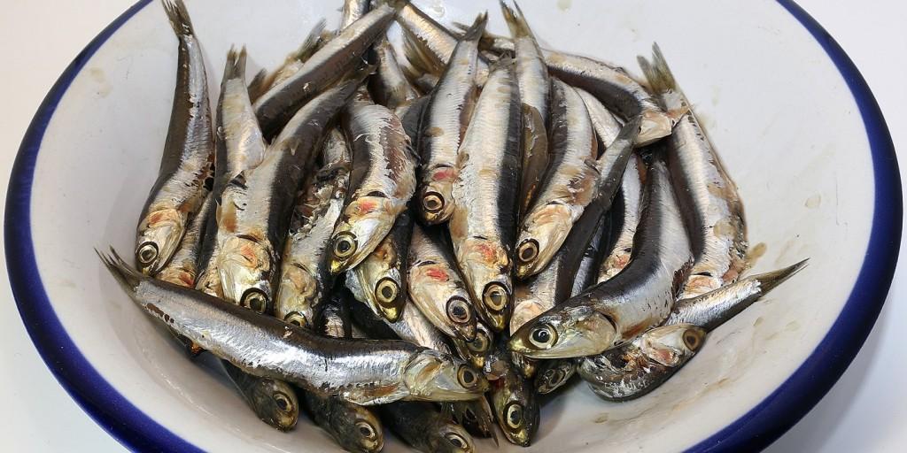anchova para saude