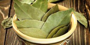 quais os benefícios das folhas de louro?