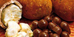 benefícios do caroço de cupuaçu