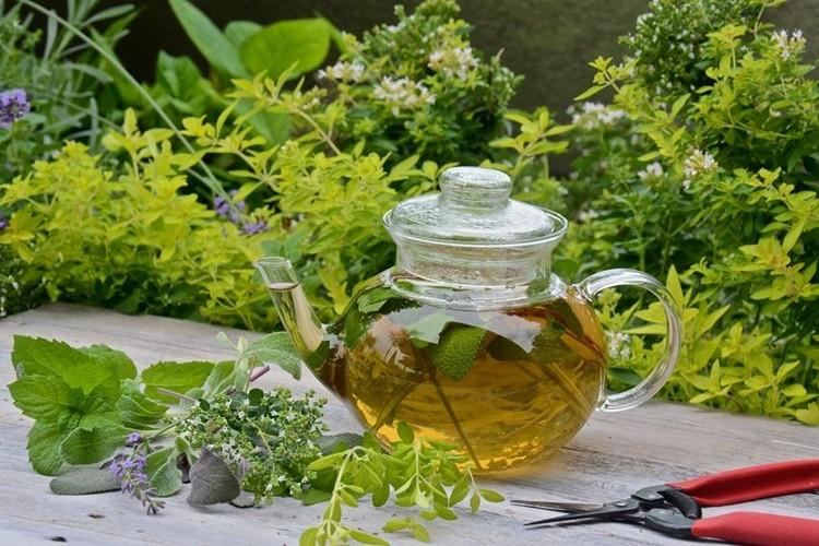 Os 20 Benefícios do Chá de Manjerona Para Saúde
