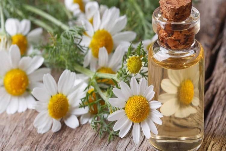 beneficios do oleo de camomila