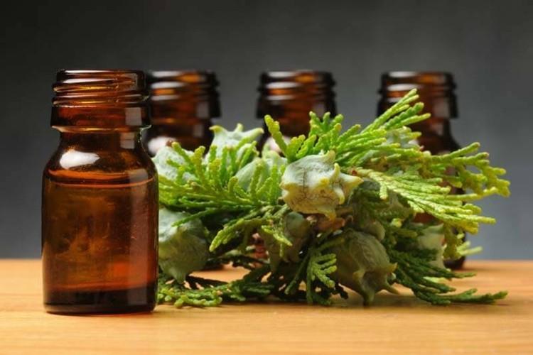 beneficios do oleo de cipreste