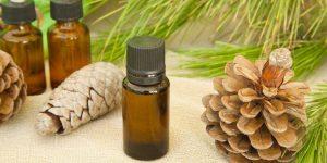 quais os benefício do óleo de pinheiro?