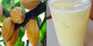 beneficios do suco de cacau