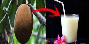 beneficios do suco de cupuaçu