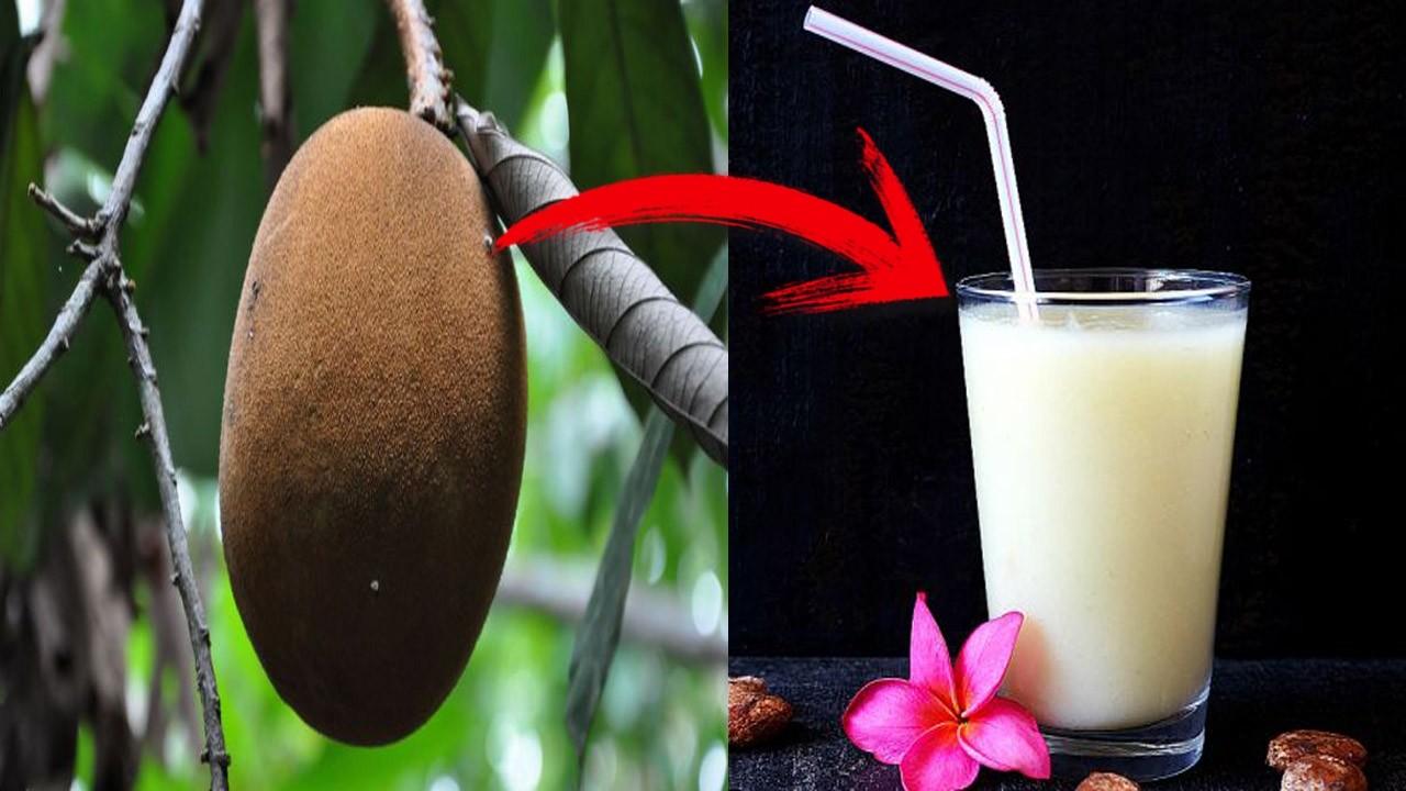 Os 30 Benefícios do Suco de Cupuaçu Para Saúde