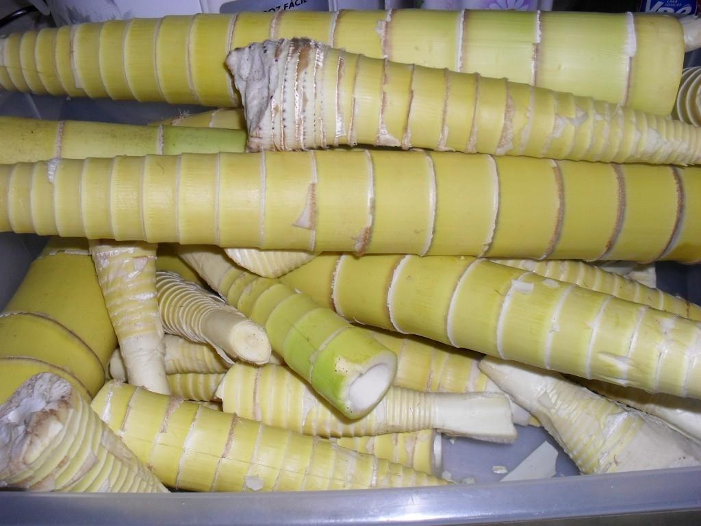 broto de bambu beneficios
