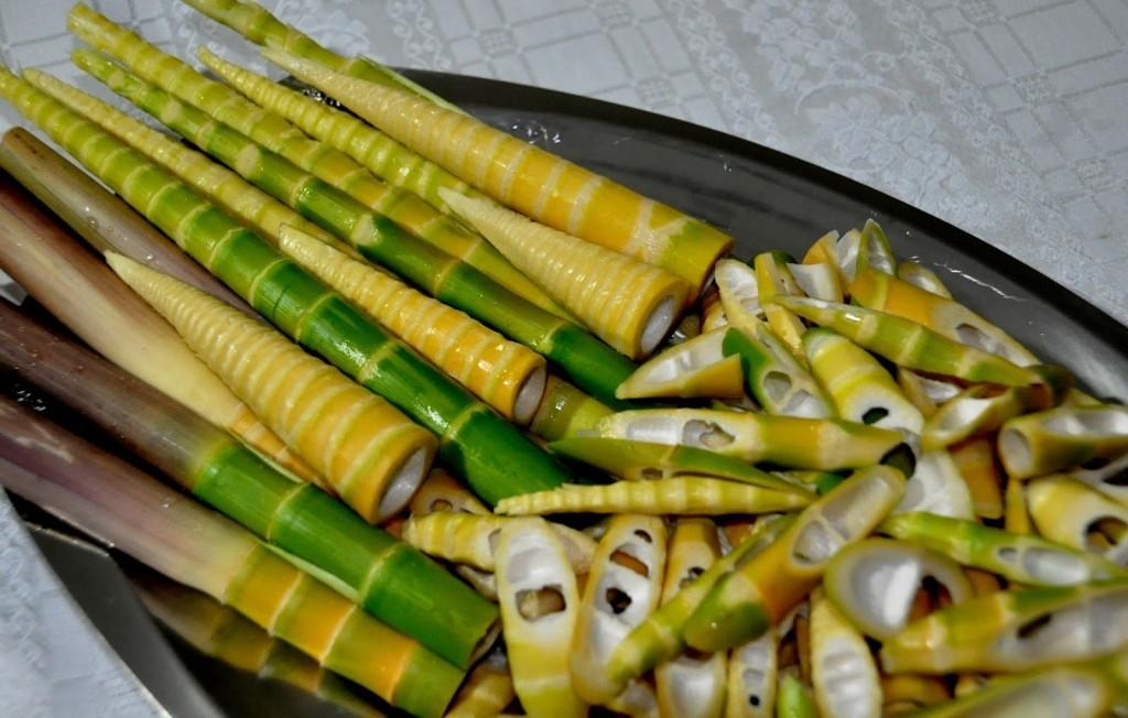 brotos de bambu