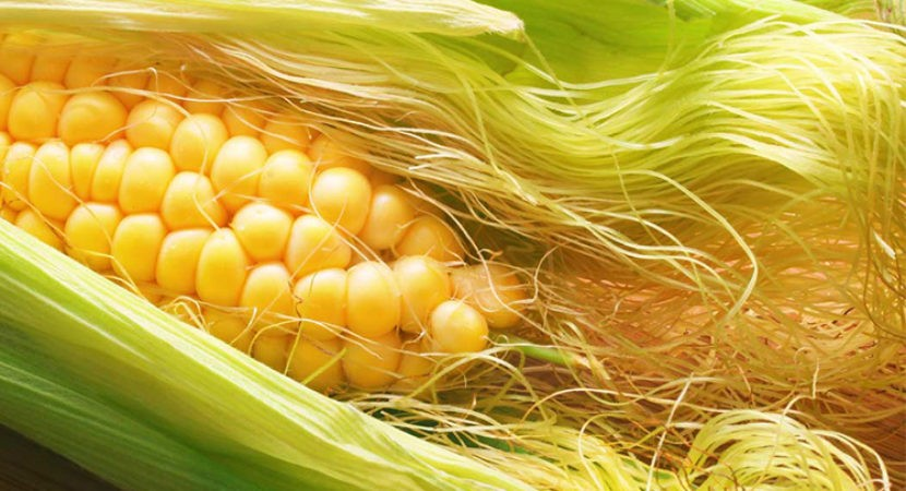 beneficios do cabelo de milho