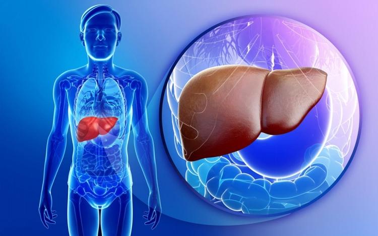 como tratar o fígado