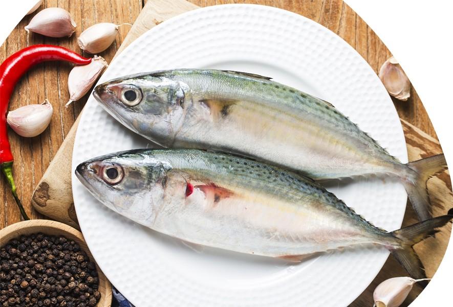 cavala peixe para perda de peso