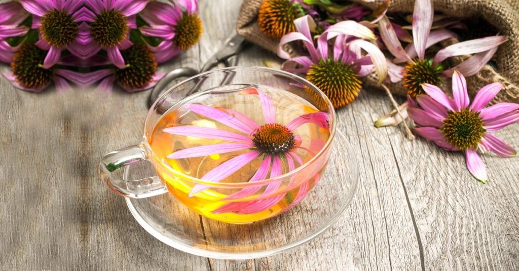 chá de equinácea