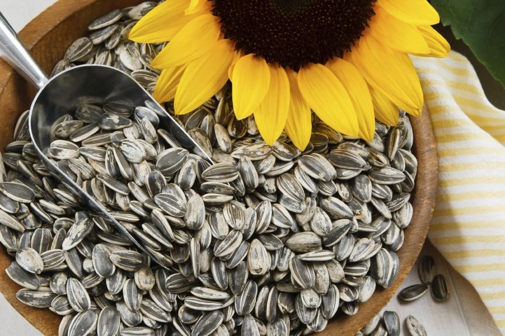 sementes de girassol beneficios