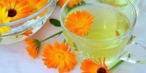 quais benefícios do chá de calêndula?