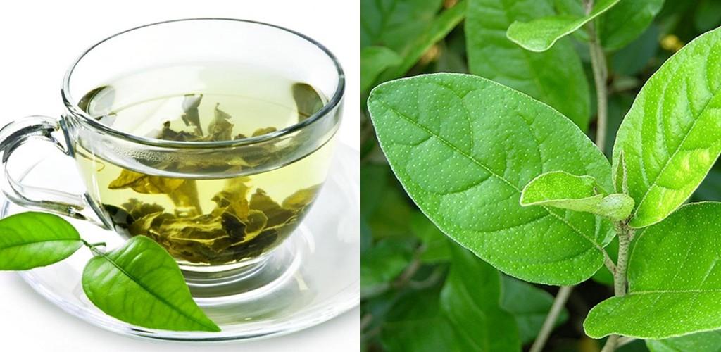 efeitos medicinais obtidos no chá de sacaca