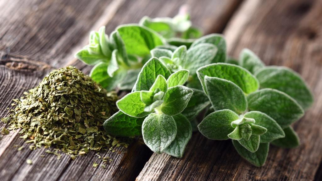 beneficios das folhas de oregano