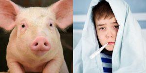 gripe suina causas