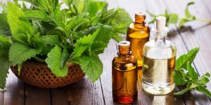 quais os benefícios do óleo de hortelã?