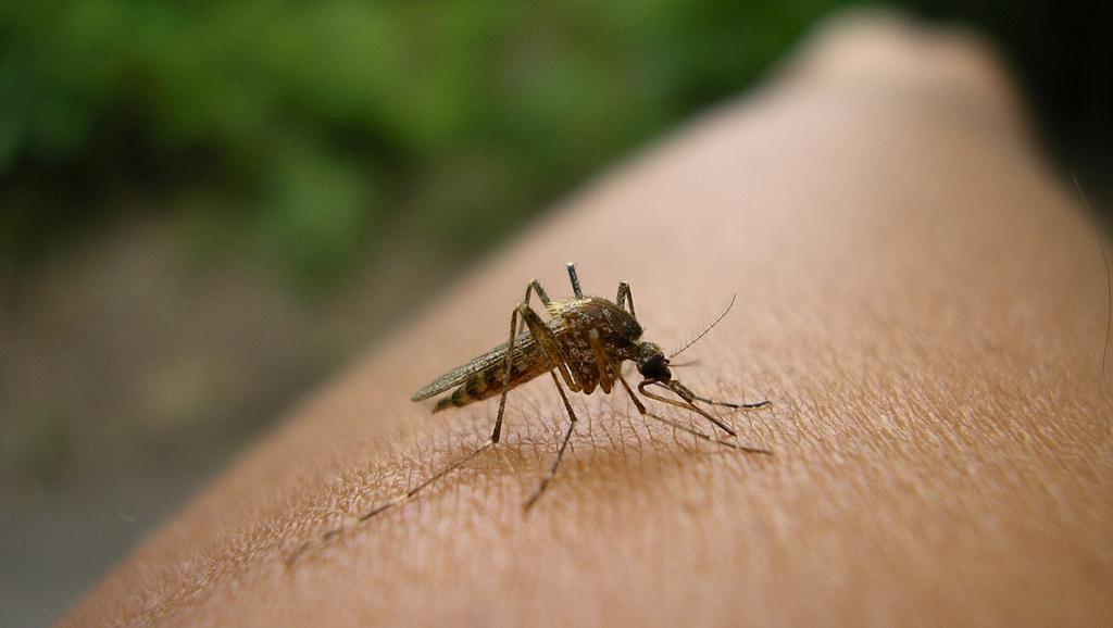 causas do paludismo