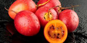 tomate arbóreo